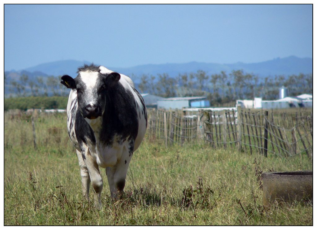 new-zealand-dairy-industry-controversy